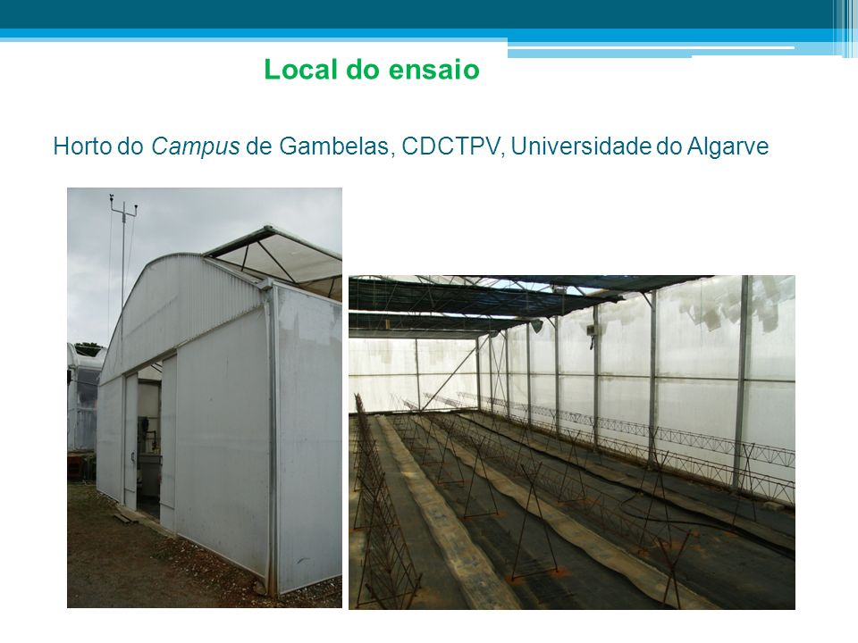Horto do Campus de Gambelas, CDCTPV, Universidade do Algarve Local do ensaio
