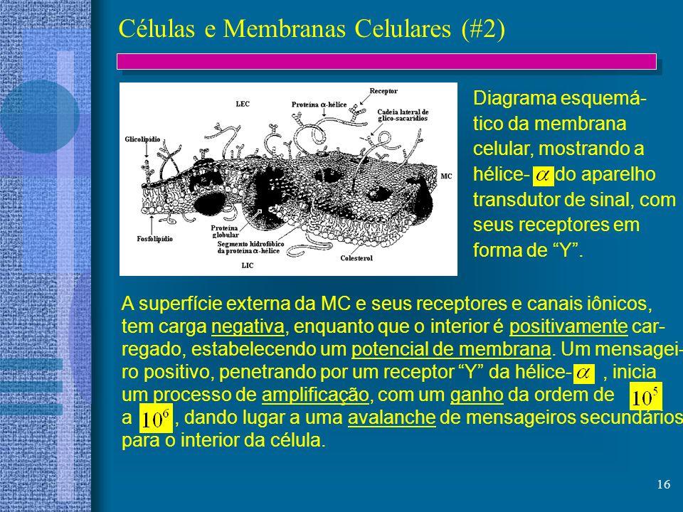 16 Células e Membranas Celulares (#2) Diagrama esquemá- tico da membrana celular, mostrando a hélice- do aparelho transdutor de sinal, com seus recept