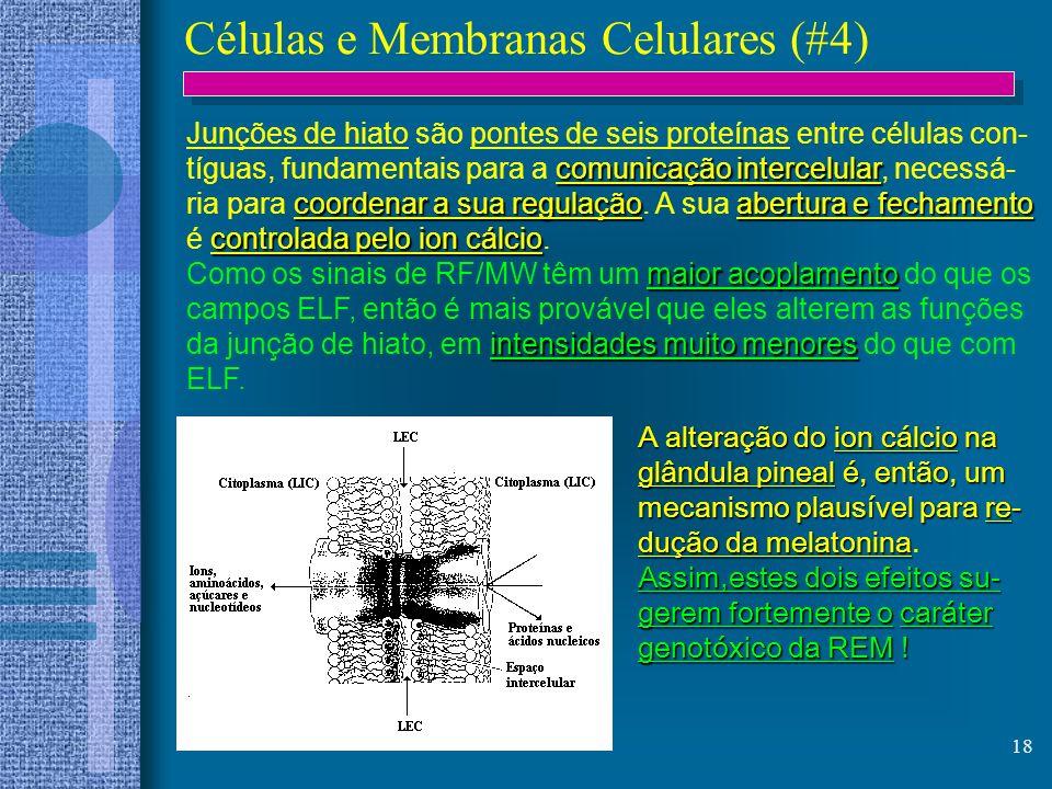 18 Células e Membranas Celulares (#4) Junções de hiato são pontes de seis proteínas entre células con- comunicação intercelular tíguas, fundamentais p