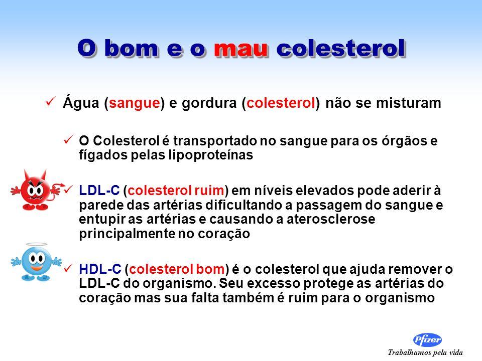 Trabalhamos pela vida O bom e o mau colesterol Água (sangue) e gordura (colesterol) não se misturam O Colesterol é transportado no sangue para os órgã