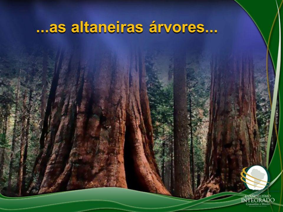 ...as altaneiras árvores...