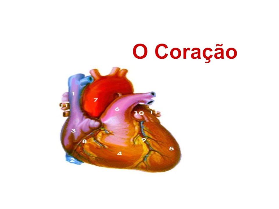 O coração é um órgão muscular localizado abaixo do osso anterior do tórax (chamado de esterno).