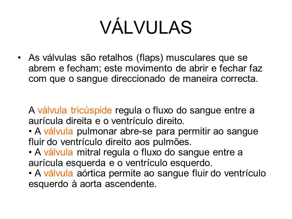 VÁLVULAS As válvulas são retalhos (flaps) musculares que se abrem e fecham; este movimento de abrir e fechar faz com que o sangue direccionado de mane