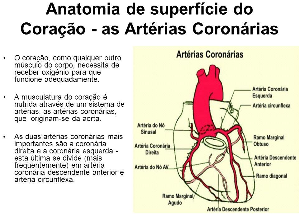 Anatomia de superfície do Coração - as Artérias Coronárias O coração, como qualquer outro músculo do corpo, necessita de receber oxigénio para que fun