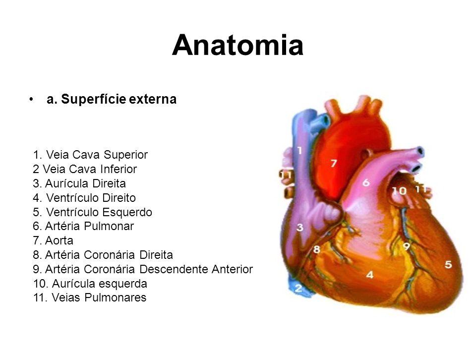 Anatomia b.Interior do Coração 1. Aurícula Direita 2.