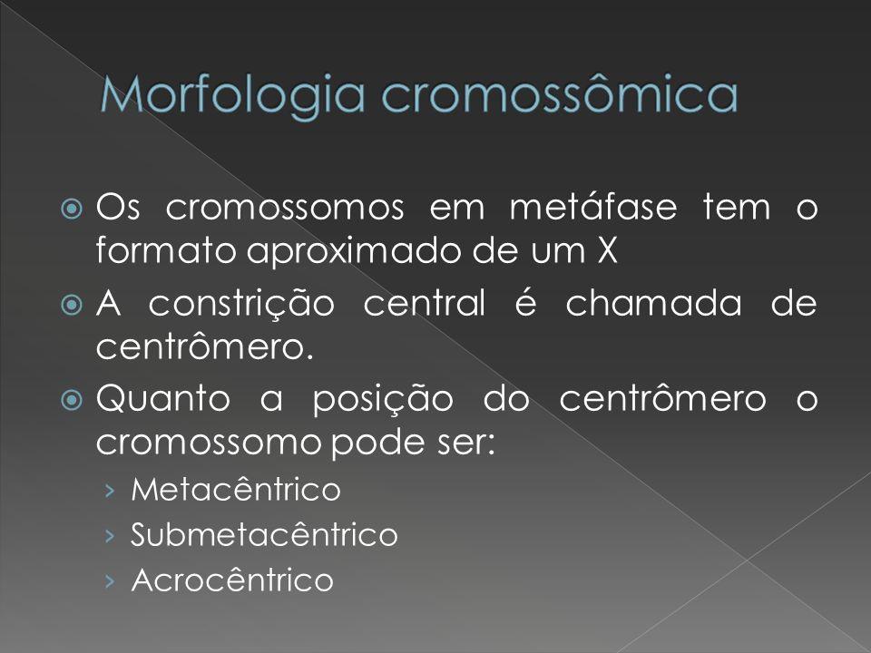 Os cromossomos em metáfase tem o formato aproximado de um X A constrição central é chamada de centrômero. Quanto a posição do centrômero o cromossomo