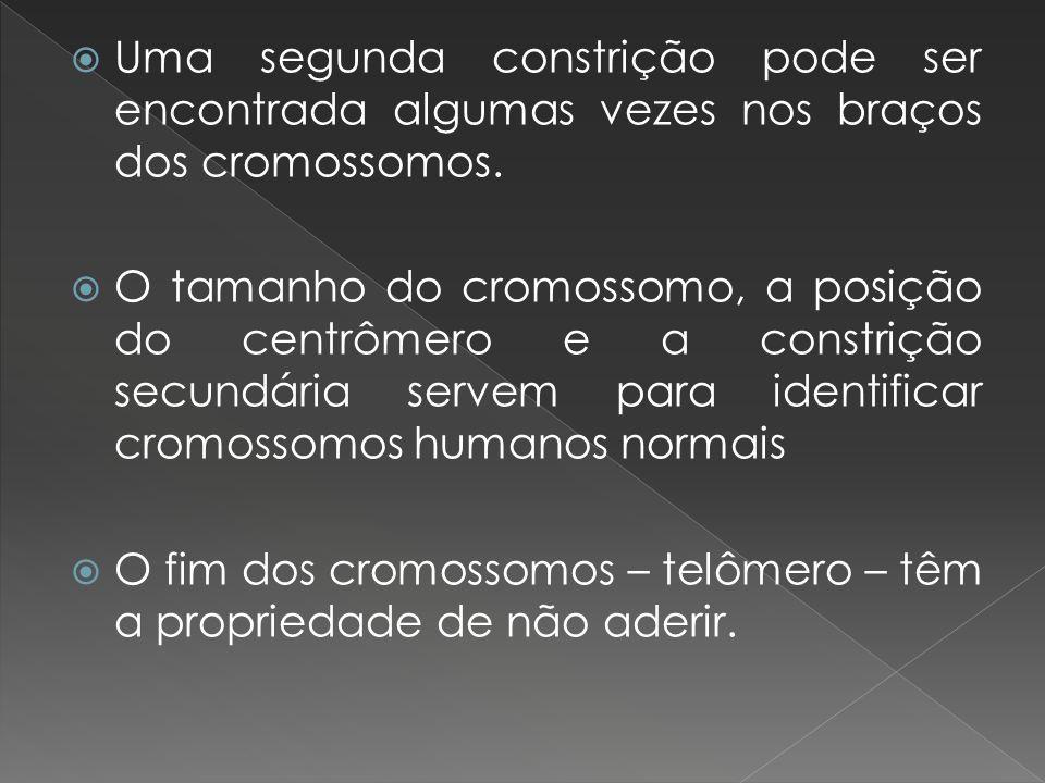 Uma segunda constrição pode ser encontrada algumas vezes nos braços dos cromossomos. O tamanho do cromossomo, a posição do centrômero e a constrição s