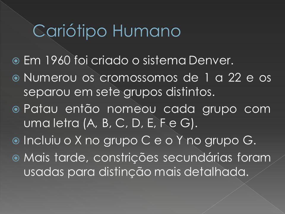 Em 1960 foi criado o sistema Denver. Numerou os cromossomos de 1 a 22 e os separou em sete grupos distintos. Patau então nomeou cada grupo com uma let