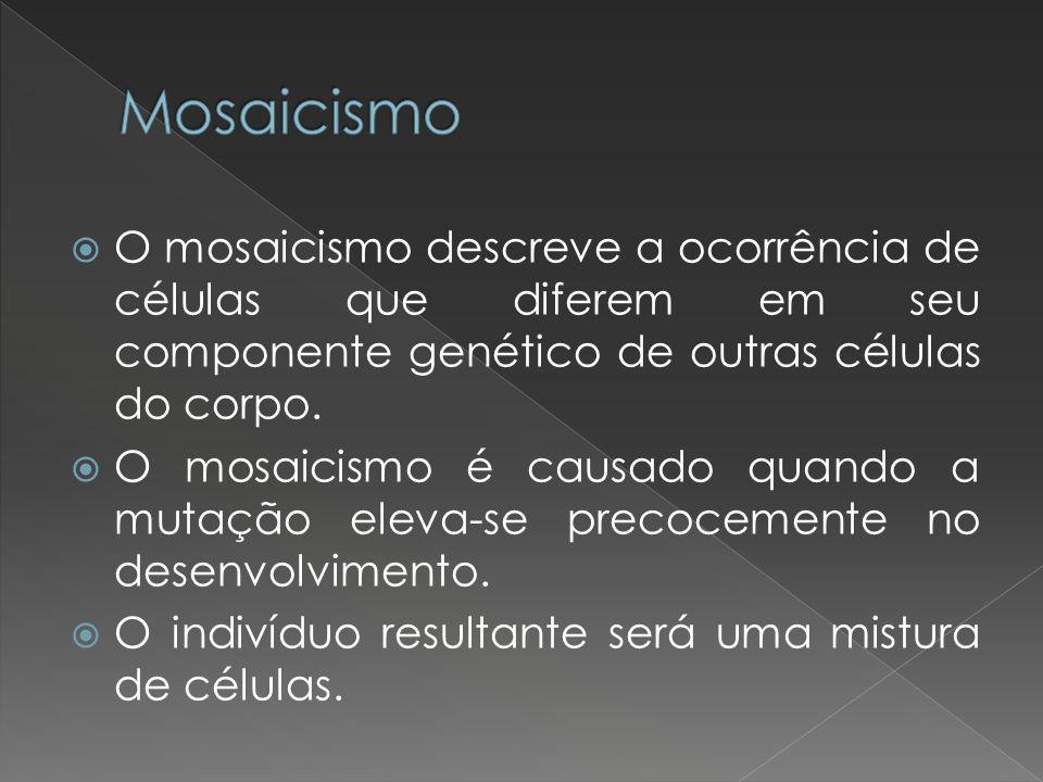 O mosaicismo descreve a ocorrência de células que diferem em seu componente genético de outras células do corpo. O mosaicismo é causado quando a mutaç