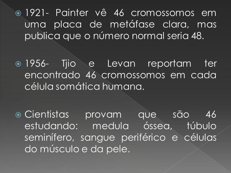 1921- Painter vê 46 cromossomos em uma placa de metáfase clara, mas publica que o número normal seria 48. 1956- Tjio e Levan reportam ter encontrado 4