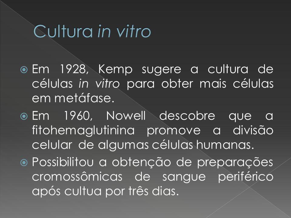 Em 1928, Kemp sugere a cultura de células in vitro para obter mais células em metáfase. Em 1960, Nowell descobre que a fitohemaglutinina promove a div