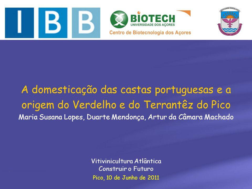 Pico, 10 de Junho de 2011 A domesticação das castas portuguesas e a origem do Verdelho e do Terrantêz do Pico Maria Susana Lopes, Duarte Mendonça, Art