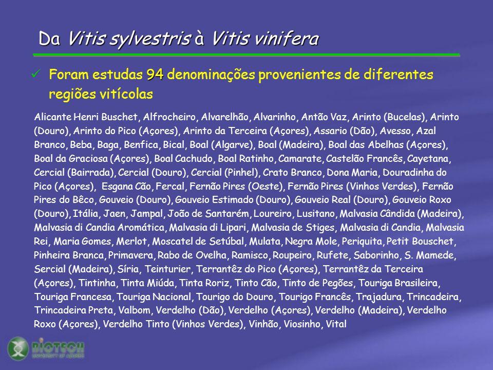 Da Vitis sylvestris à Vitis vinifera Alicante Henri Buschet, Alfrocheiro, Alvarelhão, Alvarinho, Antão Vaz, Arinto (Bucelas), Arinto (Douro), Arinto d