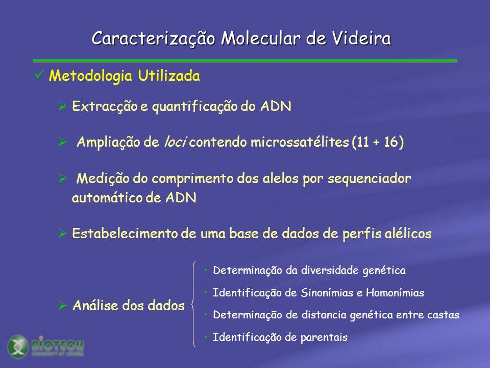 Metodologia Utilizada Extracção e quantificação do ADN Ampliação de loci contendo microssatélites (11 + 16) Medição do comprimento dos alelos por sequ
