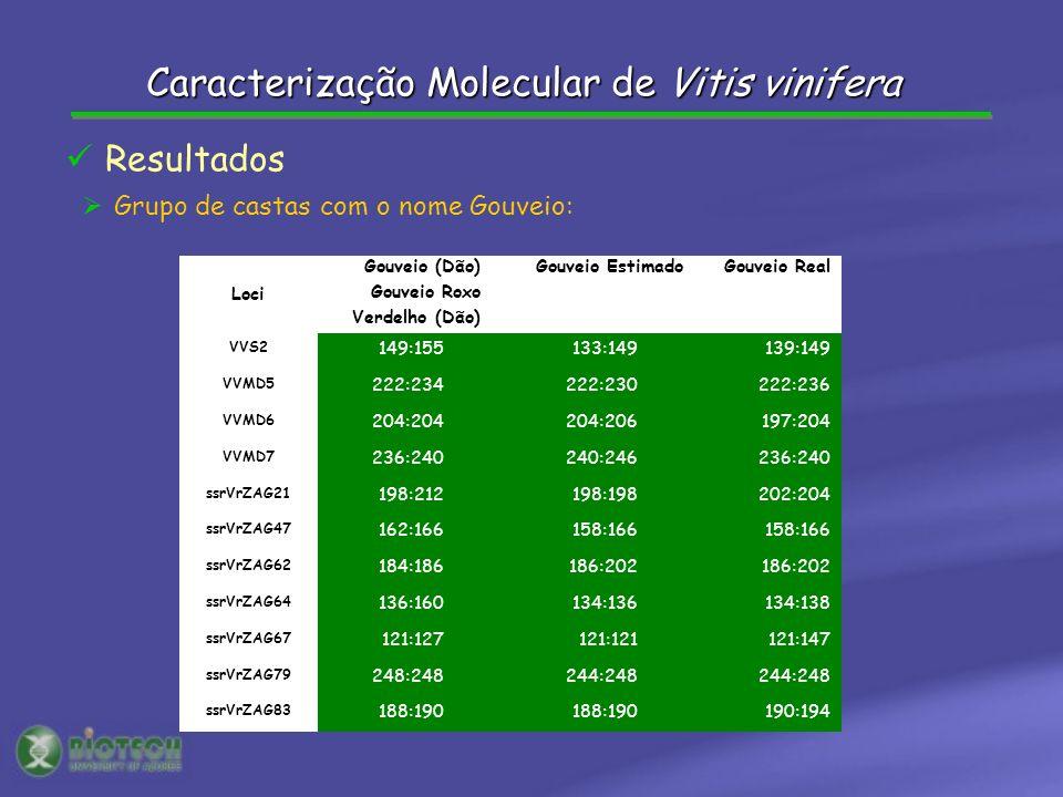 Grupo de castas com o nome Gouveio: Resultados Loci Gouveio (Dão) Gouveio Roxo Verdelho (Dão) Gouveio EstimadoGouveio Real VVS2 149:155133:149139:149