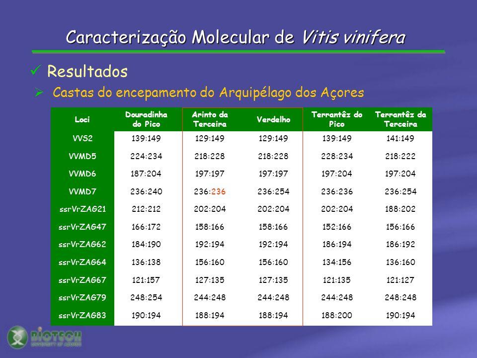 Castas do encepamento do Arquipélago dos Açores Loci Douradinha do Pico Arinto da Terceira Verdelho Terrantêz do Pico Terrantêz da Terceira VVS2139:14