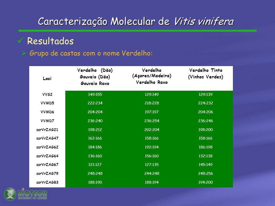 Grupo de castas com o nome Verdelho: Resultados Loci Verdelho (Dão) Gouveio (Dão) Gouveio Roxo Verdelho (Açores/Madeira) Verdelho Roxo Verdelho Tinto