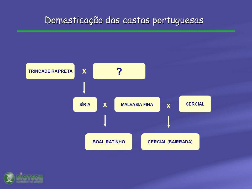 TRINCADEIRA PRETA ? X X SÍRIAMALVASIA FINA BOAL RATINHO X SERCIAL CERCIAL (BAIRRADA) Domesticação das castas portuguesas