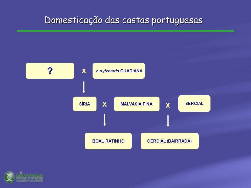 ? V. sylvestris GUADIANA X X SÍRIAMALVASIA FINA BOAL RATINHO X SERCIAL CERCIAL (BAIRRADA) Domesticação das castas portuguesas