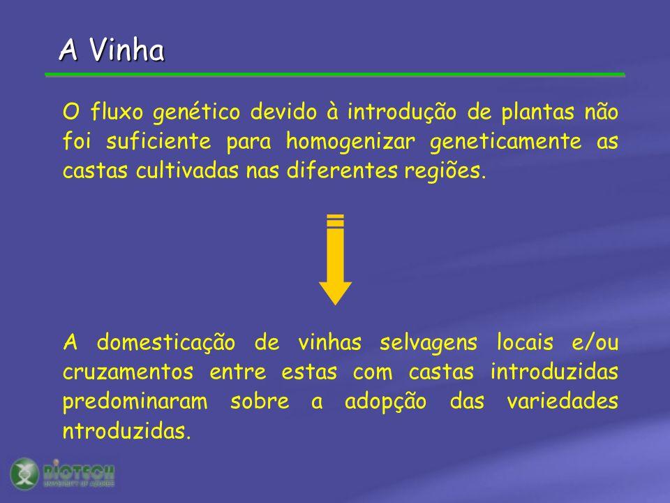 A Vinha O fluxo genético devido à introdução de plantas não foi suficiente para homogenizar geneticamente as castas cultivadas nas diferentes regiões.