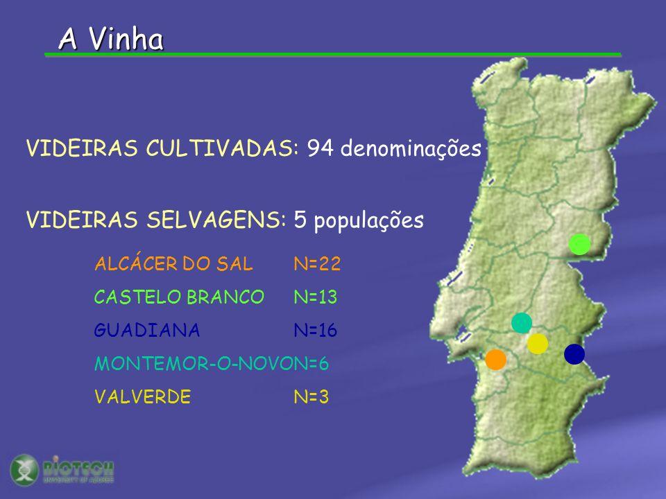 ALCÁCER DO SAL N=22 CASTELO BRANCON=13 GUADIANAN=16 MONTEMOR-O-NOVON=6 VALVERDEN=3 P1 P2 VIDEIRAS CULTIVADAS: 94 denominações VIDEIRAS SELVAGENS: 5 po