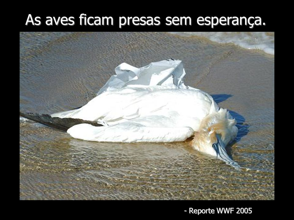As aves ficam presas sem esperança. - Reporte WWF 2005