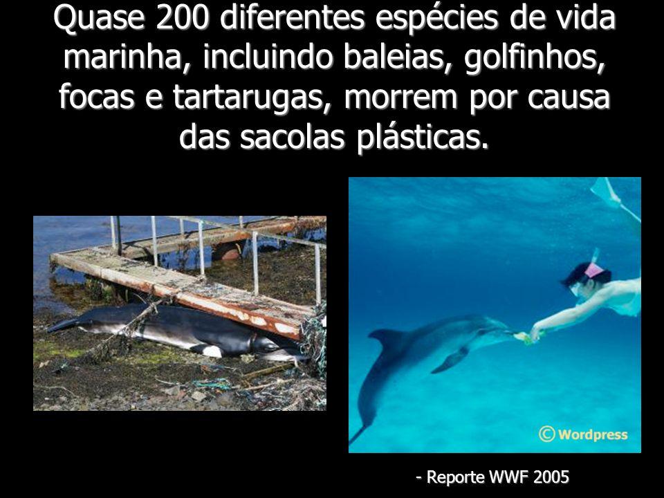 Quase 200 diferentes espécies de vida marinha, incluindo baleias, golfinhos, focas e tartarugas, morrem por causa das sacolas plásticas. - Reporte WWF