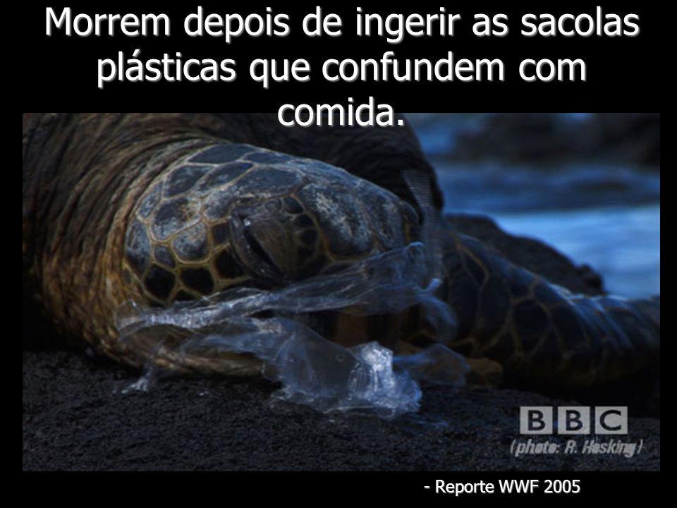 Morrem depois de ingerir as sacolas plásticas que confundem com comida. - Reporte WWF 2005