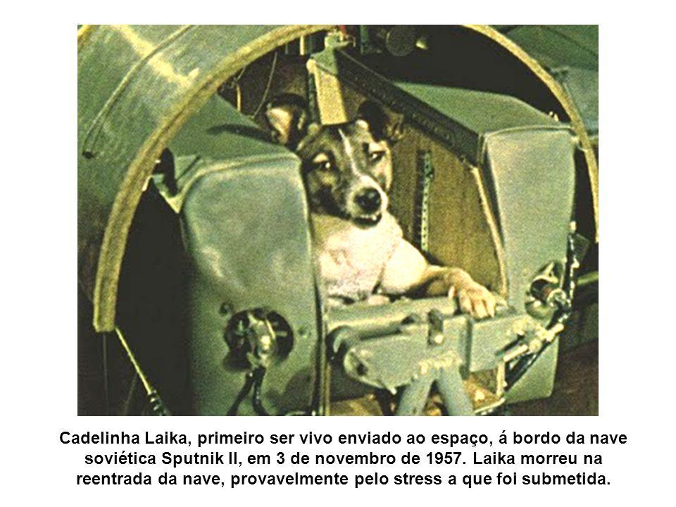 Cadelinha Laika, primeiro ser vivo enviado ao espaço, á bordo da nave soviética Sputnik II, em 3 de novembro de 1957. Laika morreu na reentrada da nav