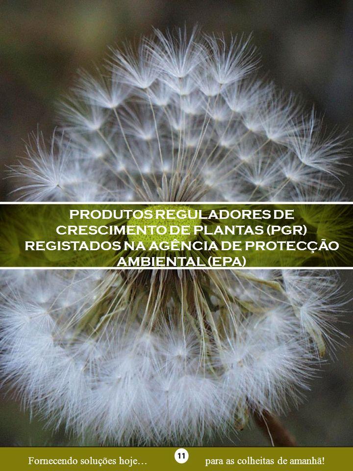 Page 11 PRODUTOS REGULADORES DE CRESCIMENTO DE PLANTAS (PGR) REGISTADOS NA AGÊNCIA DE PROTECÇÃO AMBIENTAL (EPA) Fornecendo soluções hoje…para as colhe