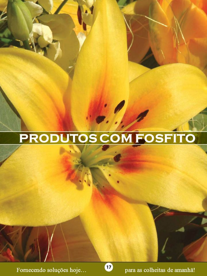 Page 17 PRODUTOS COM FOSFITO Fornecendo soluções hoje…para as colheitas de amanhã!