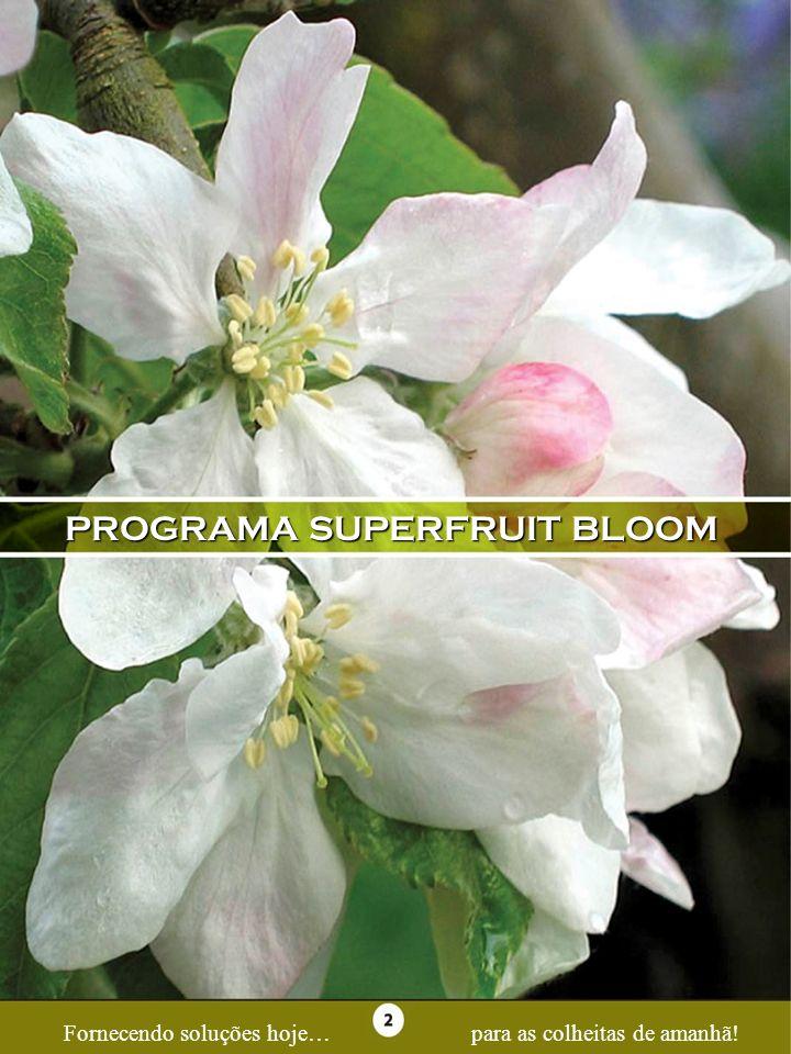 PROGRAMA SUPERFRUIT BLOOM Fornecendo soluções hoje…para as colheitas de amanhã!