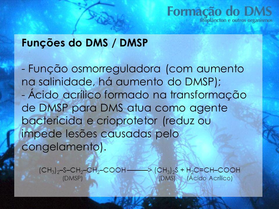 Funções do DMS / DMSP - Função osmorreguladora (com aumento na salinidade, há aumento do DMSP); - Ácido acrílico formado na transformação de DMSP para