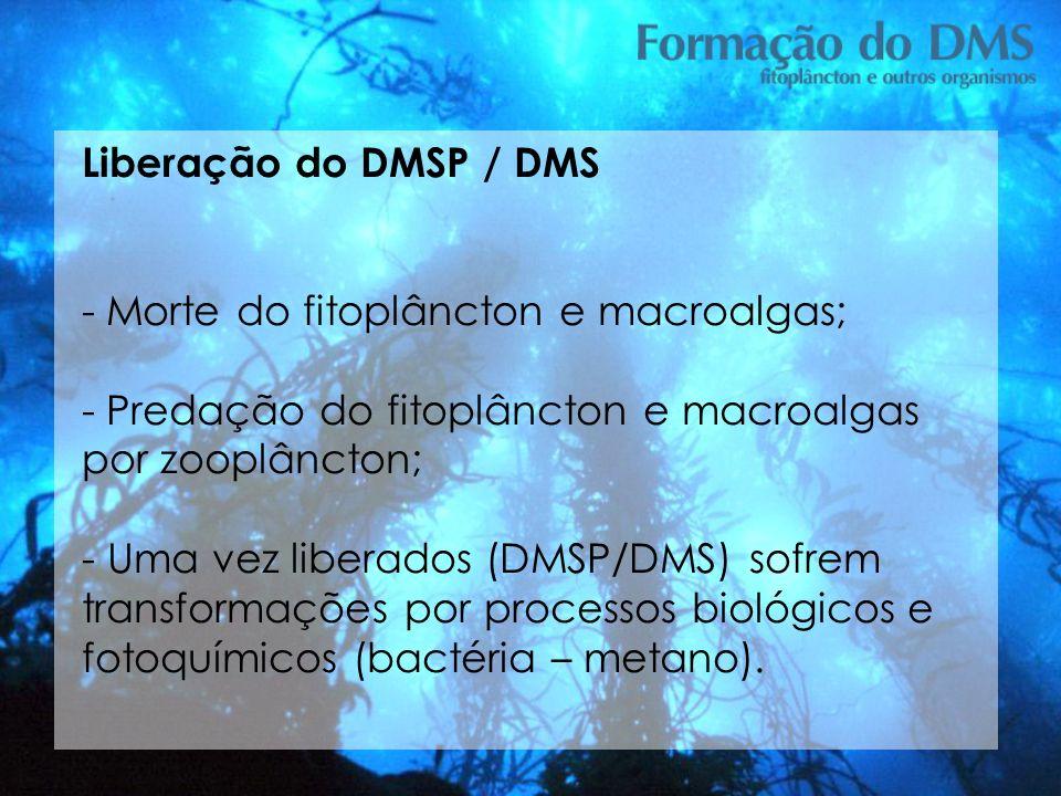 Liberação do DMSP / DMS - Morte do fitoplâncton e macroalgas; - Predação do fitoplâncton e macroalgas por zooplâncton; - Uma vez liberados (DMSP/DMS)