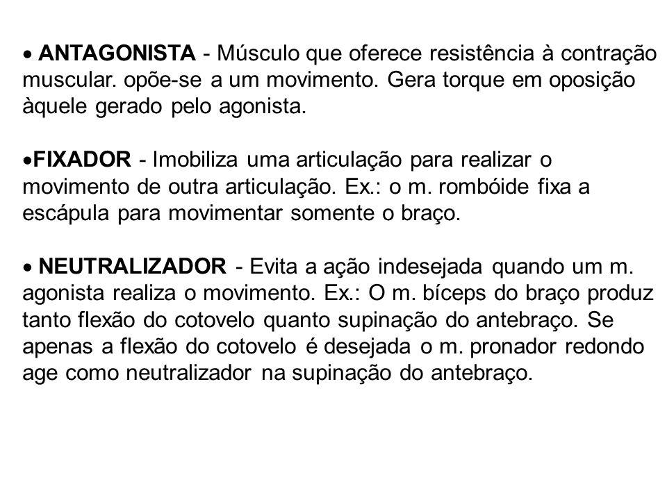ANTAGONISTA - Músculo que oferece resistência à contração muscular. opõe-se a um movimento. Gera torque em oposição àquele gerado pelo agonista. FIXAD