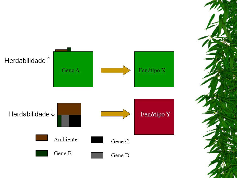 Gene AFenótipo X Fenótipo Y Ambiente Gene B Gene C Gene D Herdabilidade