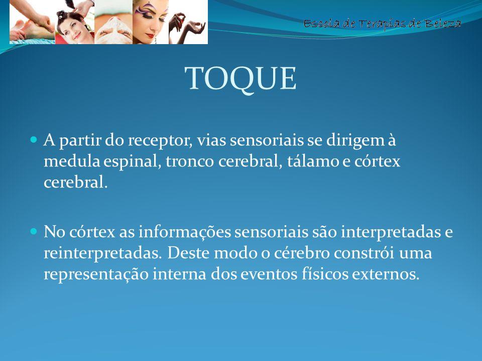 Escola de Terapias de Beleza TOQUE A partir do receptor, vias sensoriais se dirigem à medula espinal, tronco cerebral, tálamo e córtex cerebral. No có