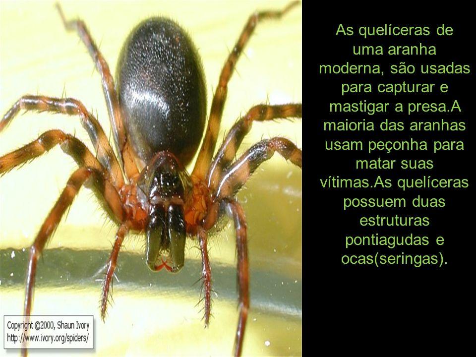As quelíceras de uma aranha moderna, são usadas para capturar e mastigar a presa.A maioria das aranhas usam peçonha para matar suas vítimas.As quelíce
