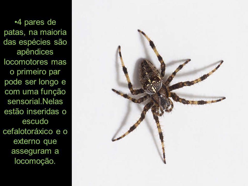 A grande maioria é predadora e captura as pressas com a ajuda das quelíceras ou dos pedipalpos e assim injeta a peçonha.