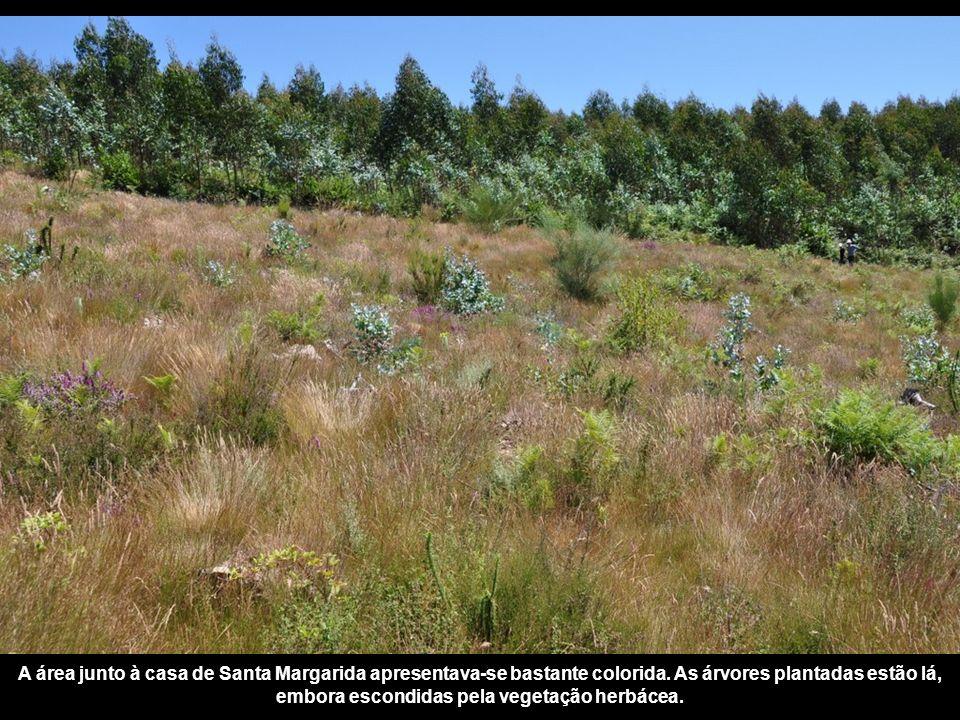 Apoios: Junta de Freguesia de Belazaima Associa ç ão Florestal do Baixo Vouga N ú cleo Regional de Aveiro Projecto desenvolvido pela: