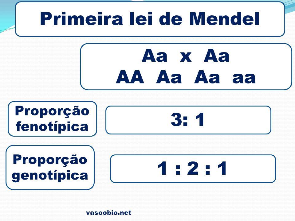 Primeira lei de Mendel Aa x Aa AA Aa Aa aa Proporção fenotípica Proporção genotípica 3: 1 1 : 2 : 1