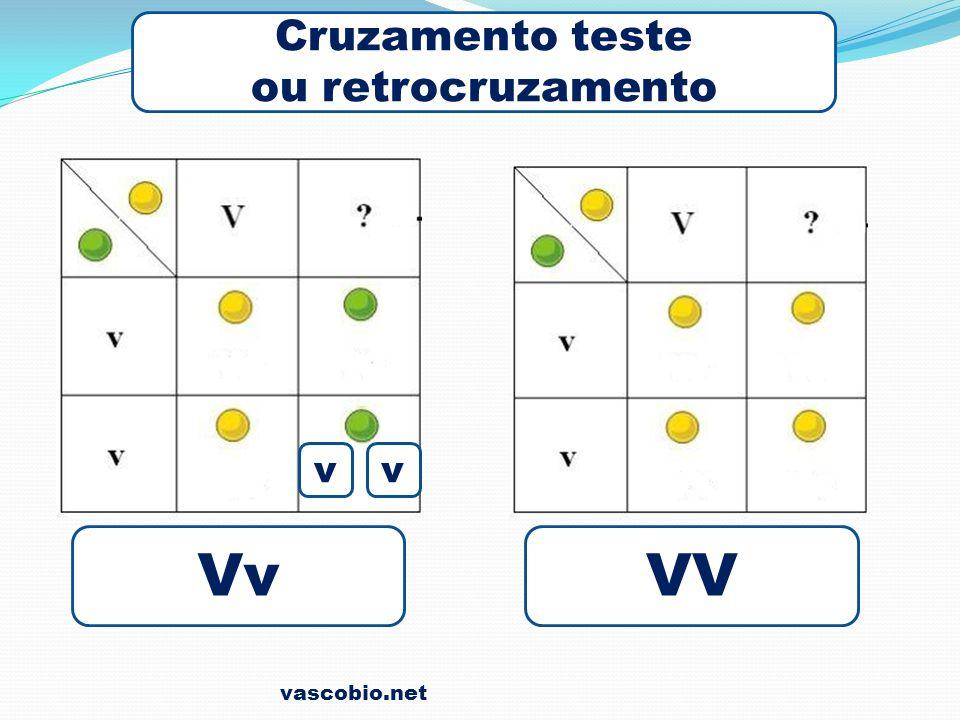 vascobio.net Cruzamento teste ou retrocruzamento VvVV vv