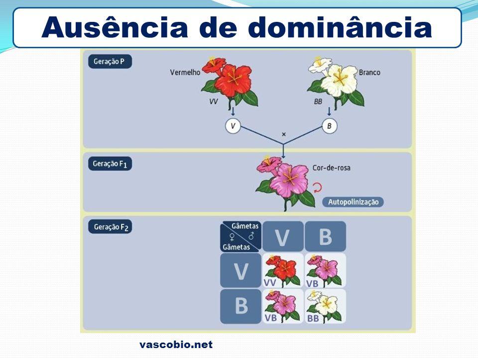 vascobio.net Ausência de dominância