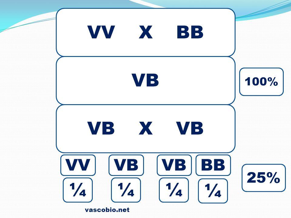 vascobio.net VV X BB VB VB X VB 100% 25% ¼ BBVB VV ¼¼¼
