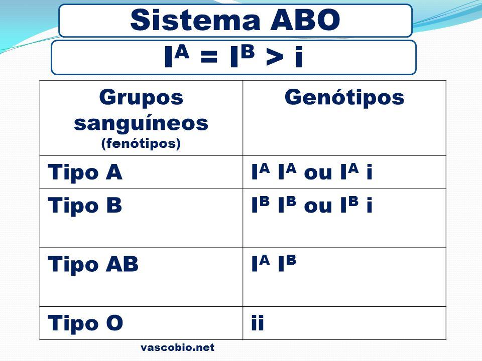 Grupos sanguíneos (fenótipos) Genótipos Tipo AI A I A ou I A i Tipo BI B I B ou I B i Tipo ABIA IBIA IB Tipo Oii Sistema ABO I A = I B > i