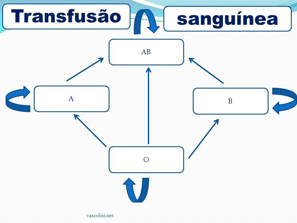 vascobio.net AB B A O Transfusão sanguínea