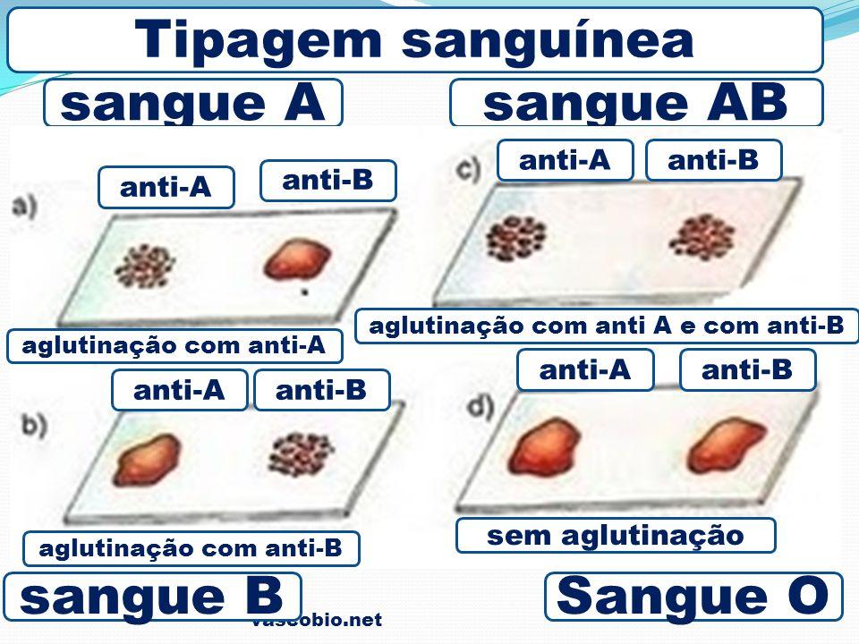 vascobio.net sangue A Sangue O sangue AB sangue B Tipagem sanguínea anti-A anti-Banti-A anti-B anti-A anti-Banti-A aglutinação com anti-A sem aglutina