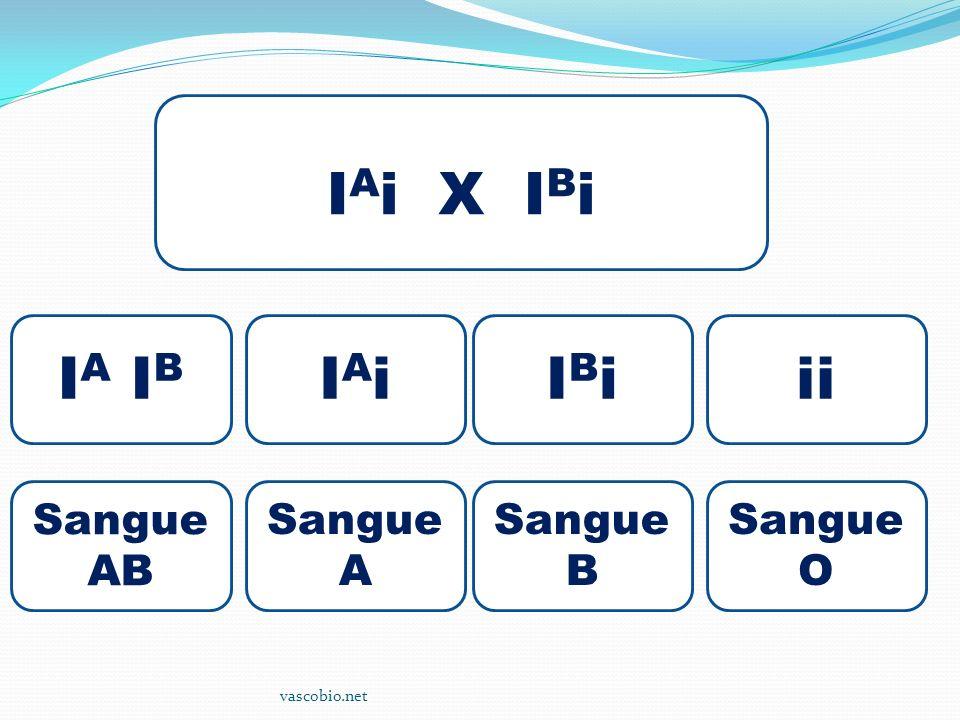 vascobio.net I A i X I B i I A I B IAiIAiIBiIBiii Sangue AB Sangue A Sangue B Sangue O