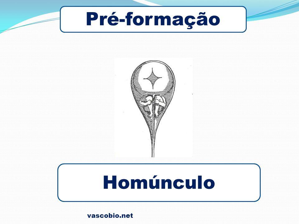 vascobio.net Pré-formação Homúnculo