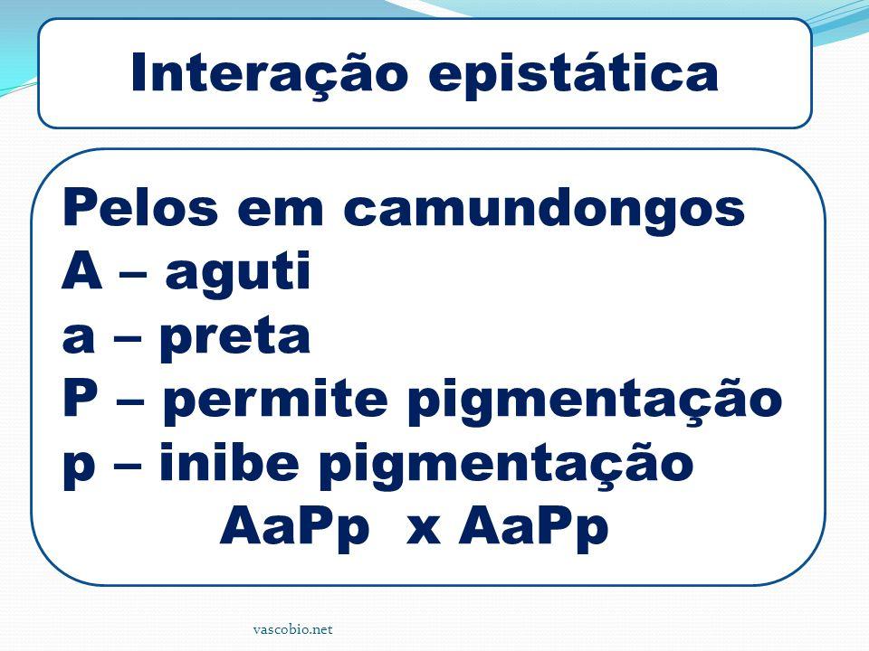 vascobio.net Interação epistática Pelos em camundongos A – aguti a – preta P – permite pigmentação p – inibe pigmentação AaPp x AaPp